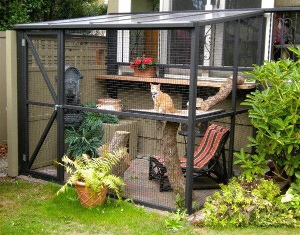 Secured Cat Garden Ideas: Fencing & Catio