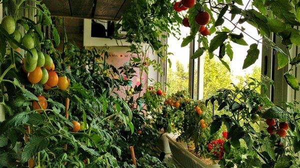 Balcony Container Vegetable Gardening Guide