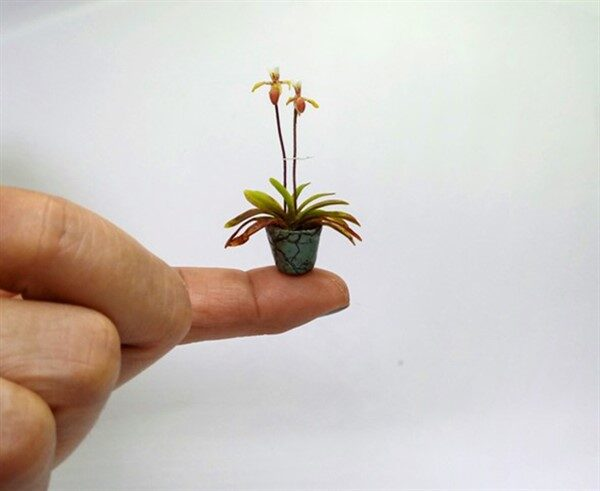 A Gorgeous Example for Miniature Decoration: Colorful Orchid