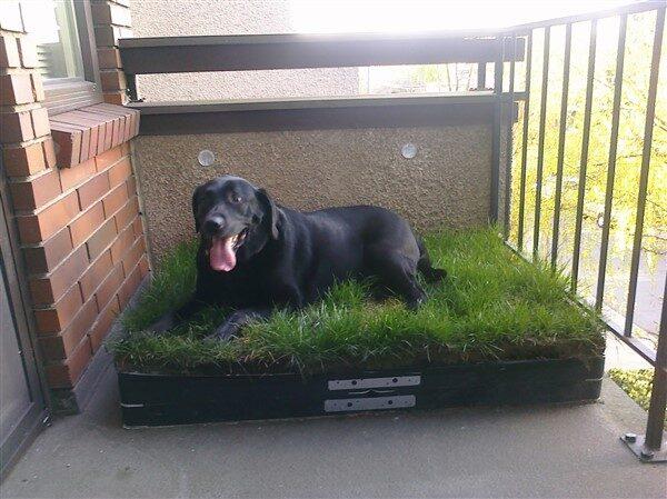 Balcony Dog Potty Ideas: Indoor Toilet Training for Dogs