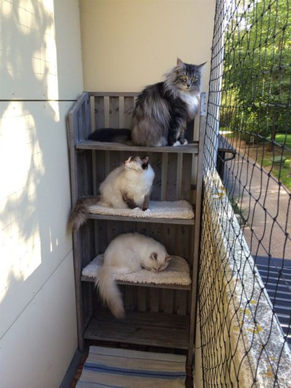 Secure and Protective Balcony Ideas with Pet Fencing ...