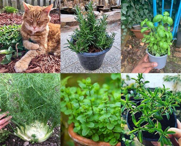 18 Balcony Herb Ideas with Maintenance Tips
