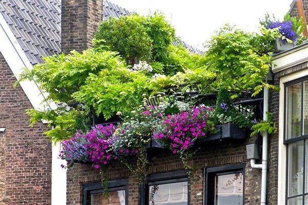 Rooftop Garden Ideas: How To Make An Attractive Garden