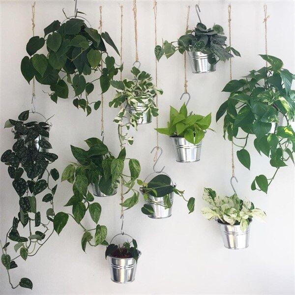 Devil's Ivy (Epipremnum aureum): Care and Growing Guide