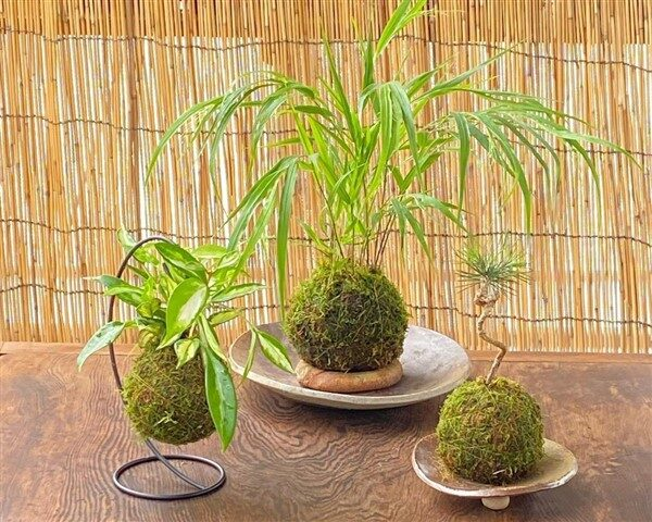 How to Make a Kokedama: Replace Flower Pots with Moss Balls?
